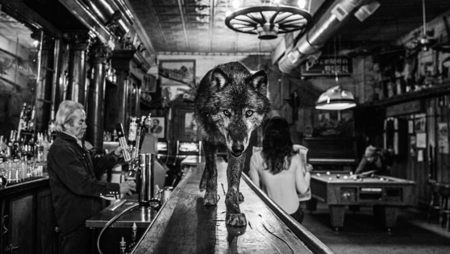 The wolf of main street david yarrow artist art angels for The family room main street
